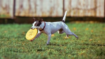 The Importance Of Exercise For Pets