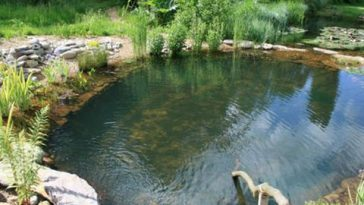 The Numerous Pond Problems and Why You Need to Employ Pond Treatment Companies